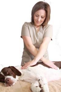 natalie lenton canine massage