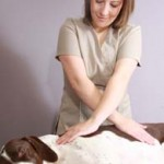 Natalie performs myofascial release on English Pointer