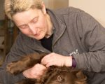 Massage for dog with degenerative Joint disease